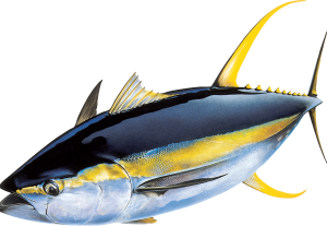 Frozen Yellowfin Tuna 1kg – Ready Stock